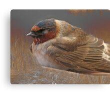 Sleeping Swallow Canvas Print