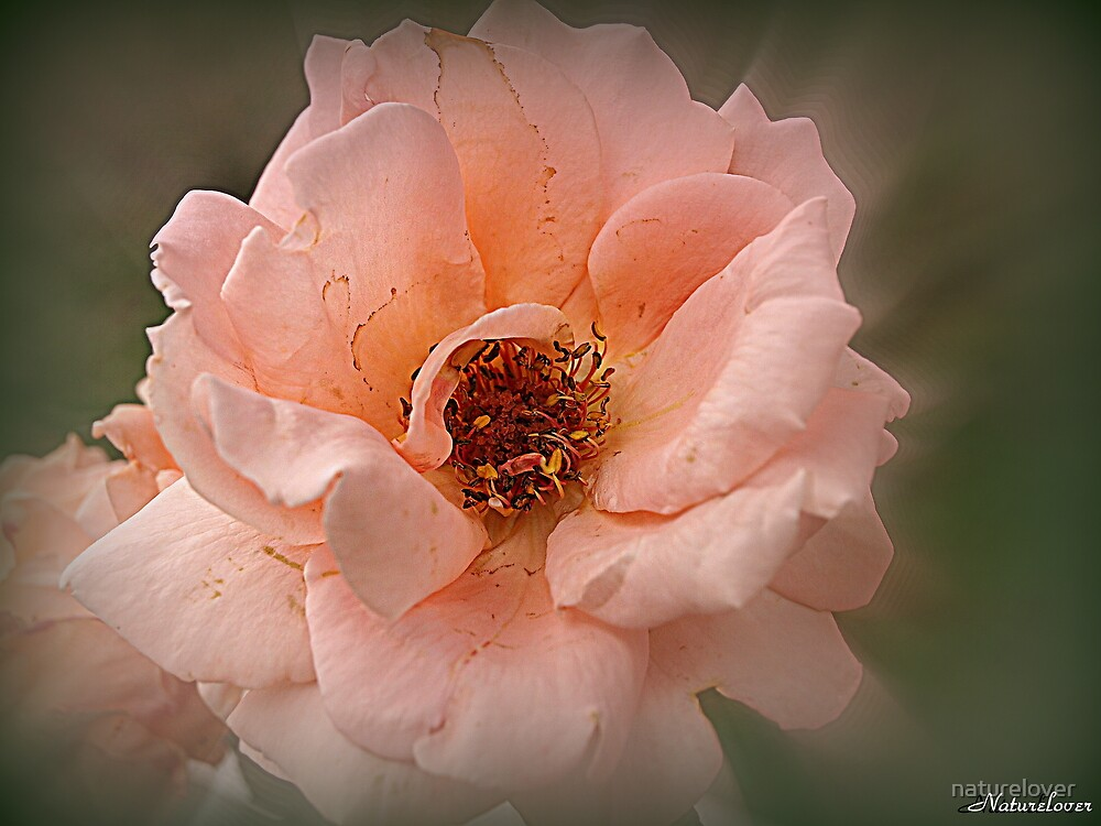 Late Glow Of Summer by naturelover