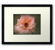 Late Glow Of Summer Framed Print