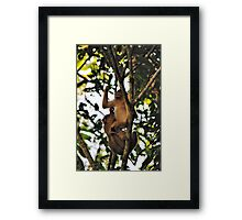 """Groom Me"" Framed Print"