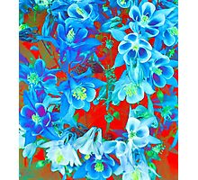 Columbine Flowers Photographic Print