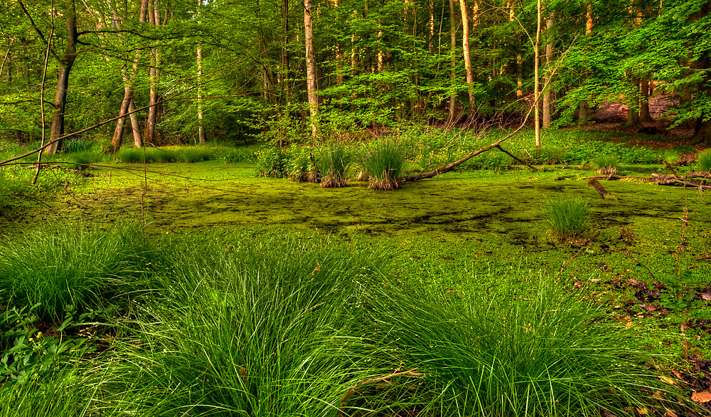The Swamp Revisited by Keld Bach