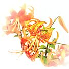 Tiger Lily - watercolour by PhotosByHealy