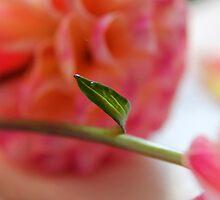 Dahlia Leaf by Annie Underwood
