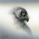 Barking Owl study by Christopher Pope