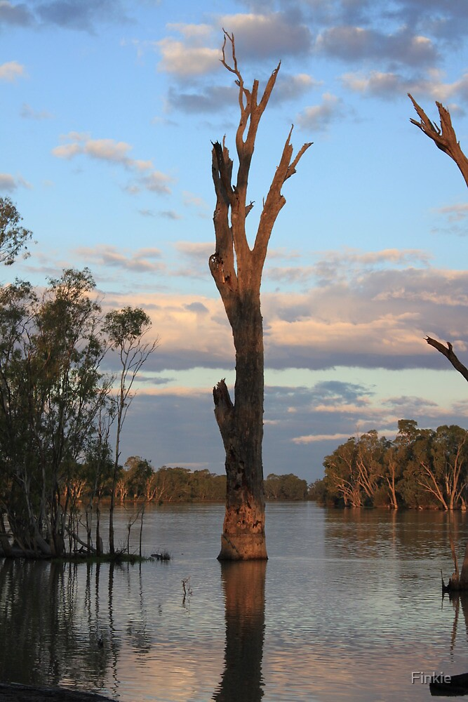 Murray River Reflections by Finkie