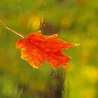 Leaf on Windshield by Eva Kato