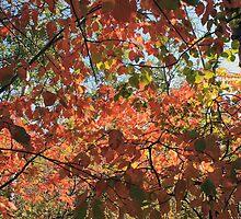 Canadian Autumn by Jim Sauchyn