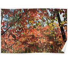 Canadian Autumn Poster