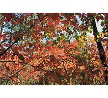 Canadian Autumn Photographic Print