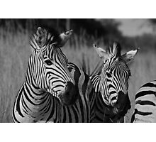 Zebras in Mono Photographic Print