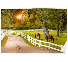 Lovely horses grazing at dusk... Poster
