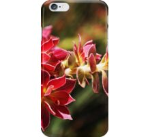 Wild-flower in Fitzgerald River National Park iPhone Case/Skin