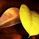 Autumn Leaves by Ellen Cotton