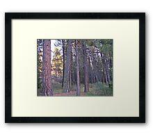 ponderosa forest Framed Print