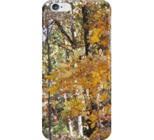 golden hickory in woodland path iPhone Case/Skin