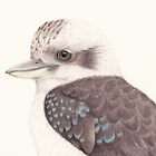 Kookaburra by Catherine Gabriel