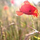 Bright summer flower  by AngelaFoster