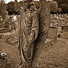 Angels Have No Philosophy But Love by Lisa Hafey