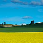Canola Crop by D-GaP