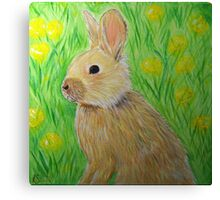 Bunny in Buttercups Canvas Print