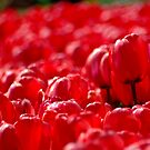 Beds of Red by waxyfrog