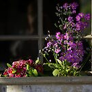 Window Box by waxyfrog