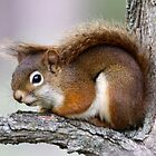 Red Squirrel by Dennis Cheeseman
