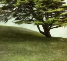 Lone Cypress Sticker