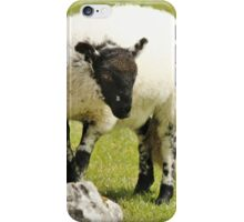 Yorkshire Lamb iPhone Case/Skin