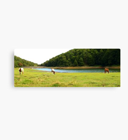 Grazing by the Water (1) Canvas Print