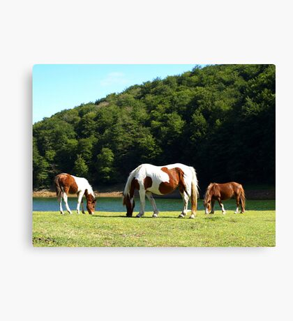 Grazing by the Water (3) Canvas Print