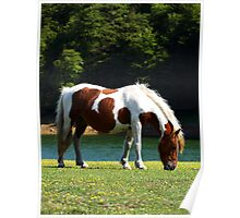 Grazing Horses (7) Poster