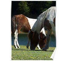 Grazing Horses (12) Poster