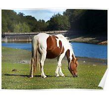 Grazing Horses (13) Poster