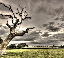 The Lightning Tree by ukscotth