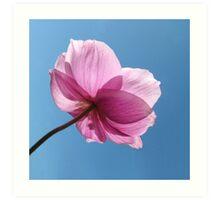 Japanese Windflower Anemone Art Print