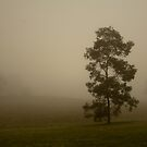 Alone in the Mist by CKImagery