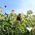 Butterflies by Sweetpea06