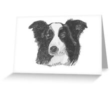 Border Collie Dog Pencil Drawing Greeting Card