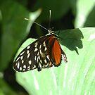 Butterfly on a leaf by Sweetpea06