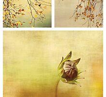 Seasons by Anne Staub