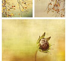 Collages by Anne Staub by Anne Staub