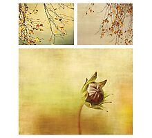 Seasons Photographic Print