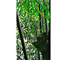 """""""Fast Growing"""" Photographic Print"""