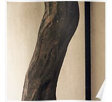 Curvy Tree Trunk Poster