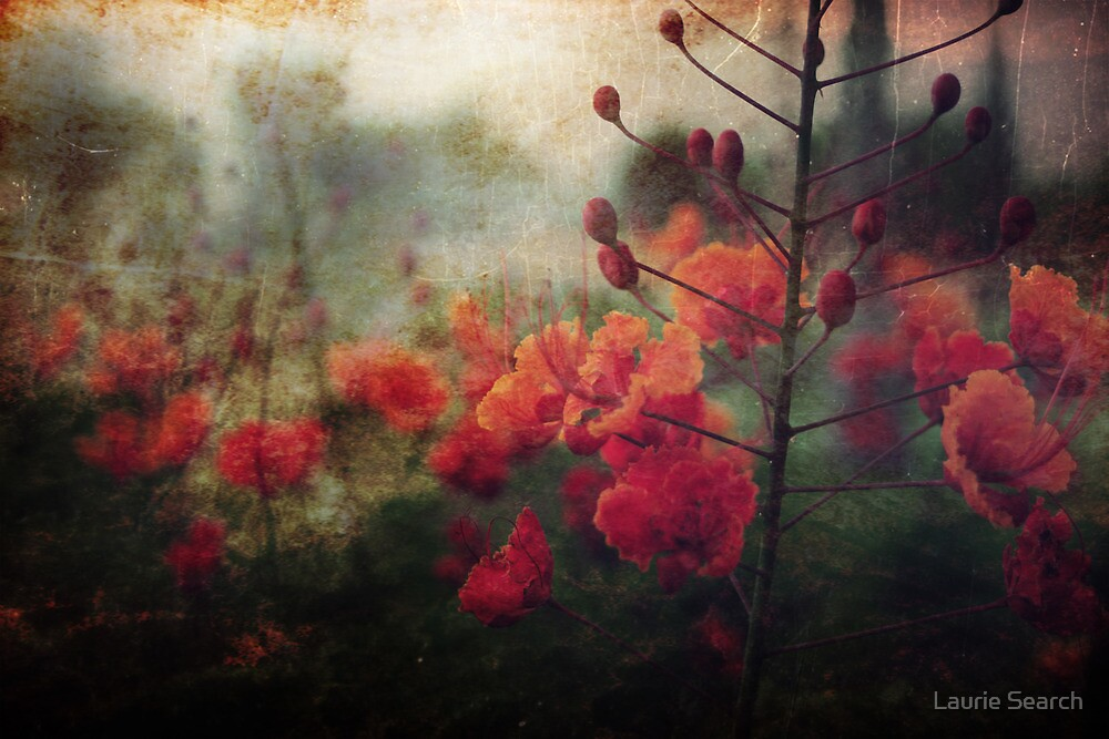 Waiting for Better Days by Laurie Search