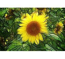 Sunflowers abstract Photographic Print