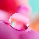 Fuchsia Drop by Sharon Johnstone