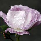 Purple Rain by Julesrules